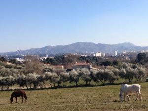 marseillefaitmaison-terre de mars-marseille-provence-agriculture-produits locaux-bio-chevaux