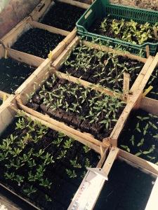 marseillefaitmaison-terre de mars-marseille-provence-agriculture-produits locaux-jeunes pousses-bio