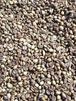 marseillefaitmaison-marseille-fait-maison-cafe-luciani-cafe-maison-torrefacteur-grains-de-cafe-grains-verts