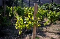 marseillefaitmaison-moulinduroy-moulin-huile-dolive-agriculture-culture-provence-produits-locaux-vignes-vin-marseille